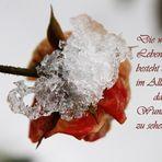 Eis Rose....