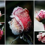 Eis-Rosen-Bouquet