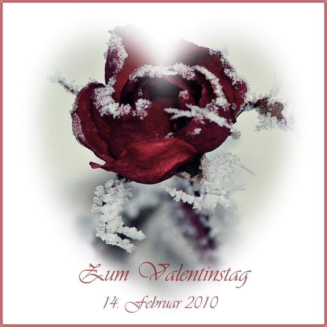 Eis Rosen Zum Valentinstag Foto Bild Gratulation Und