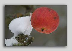 Eis_Apfel_2