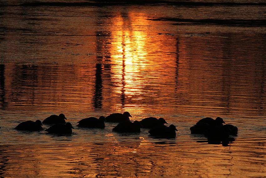 Eisbaden in der Morgensonne