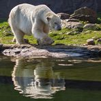 Eisbär 002