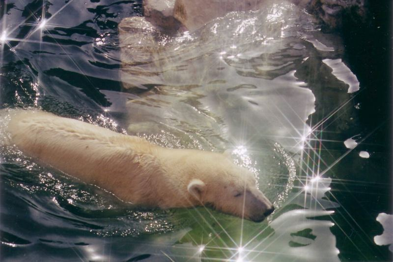 Eisbär im Bad