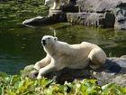 Eisbär im Zoo..: )