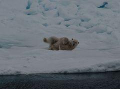 Eisbär -ist mir warm-