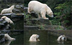 Eisbären- Baden