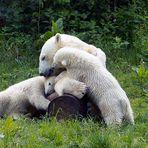 Eisbärenfamilie zur Schmuse-stunde