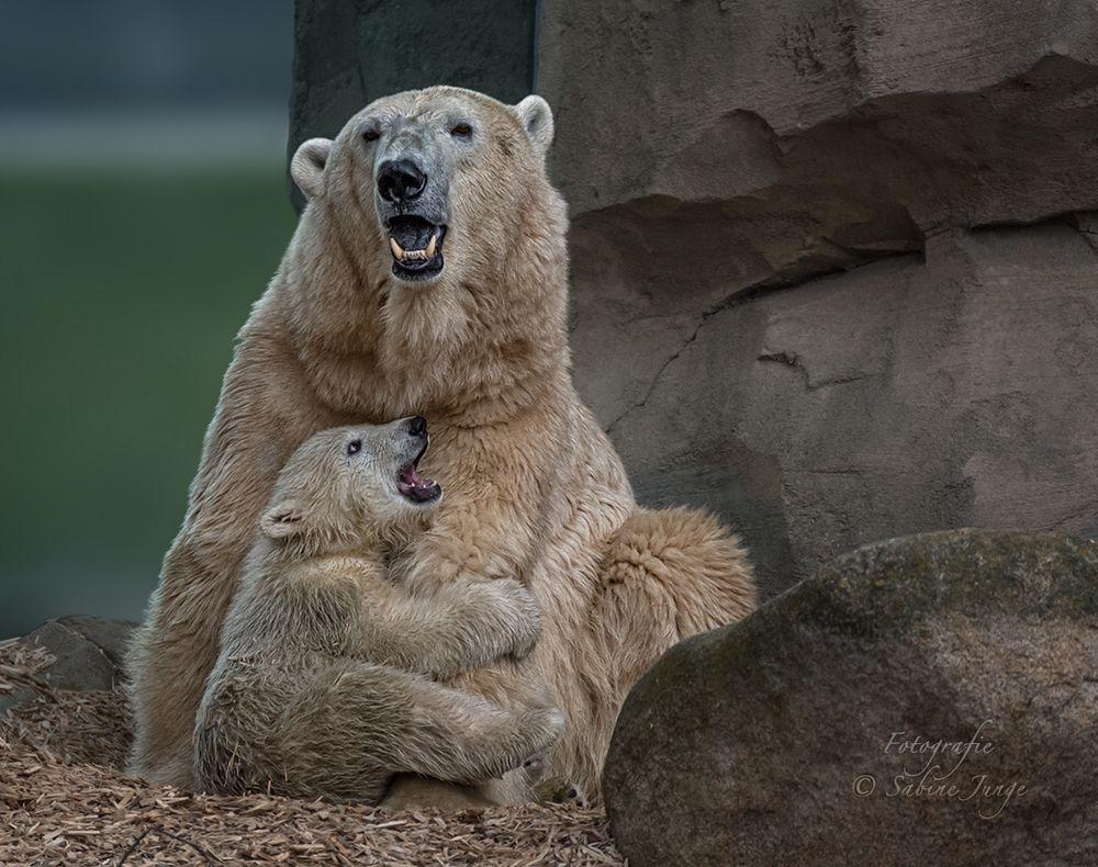 Eisbärenkind Lili