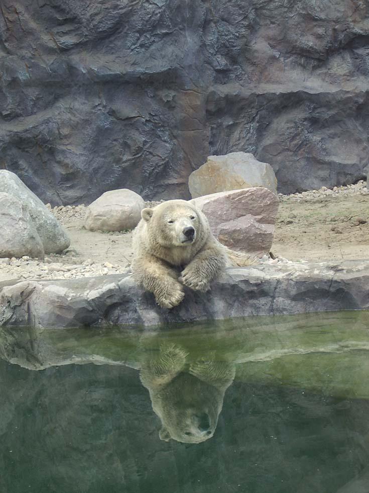 (Eis)Bärenstark