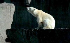 Eisbärenstark die Zweite
