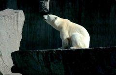 Eisbärenstark im Wilden Süden