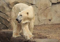 Eisbärenwetter