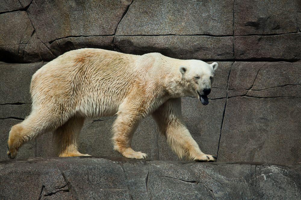Eisbärenwetter...