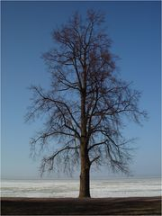 Eisbaum