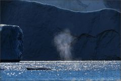 Eisbergwelten 6