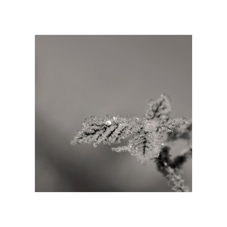 Eisblätter