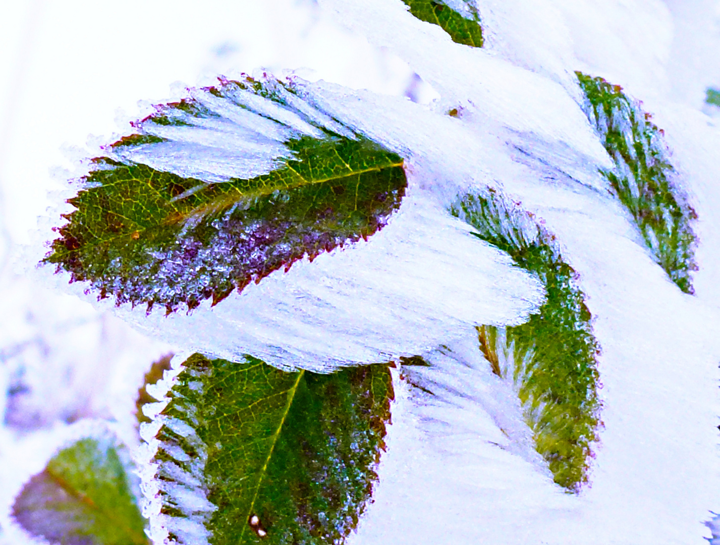 Eisblätter - Der Winter malt bereits...