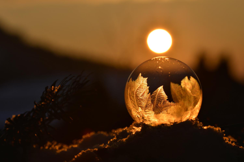 Eisblumen im Abendlicht