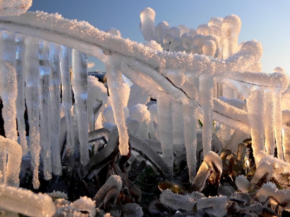 Eisbotanik von Bernhard Fuchs