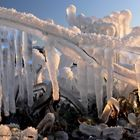 Eisbotanik