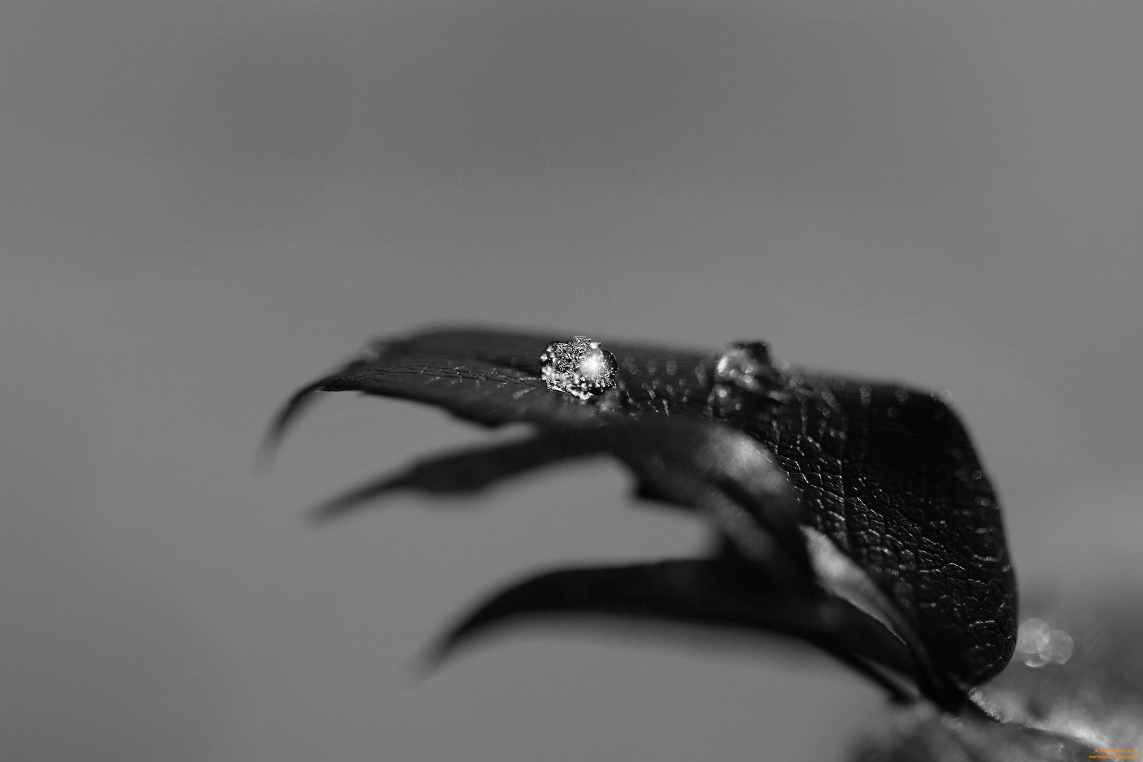 """Eis""""Diamant"""" auf einem Blatt"""