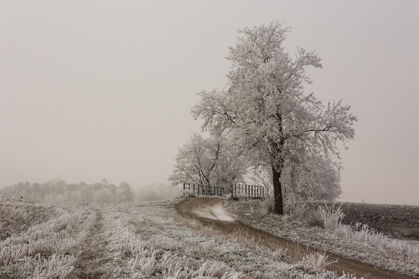 Eiseskälte liegt auf dem Land