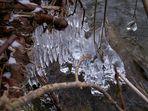 Eisgewächse I