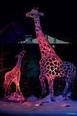 Eis.Giraffen