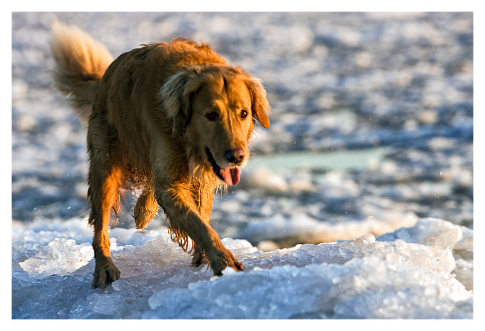 Eishund