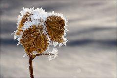 EISIG kalt! (2)