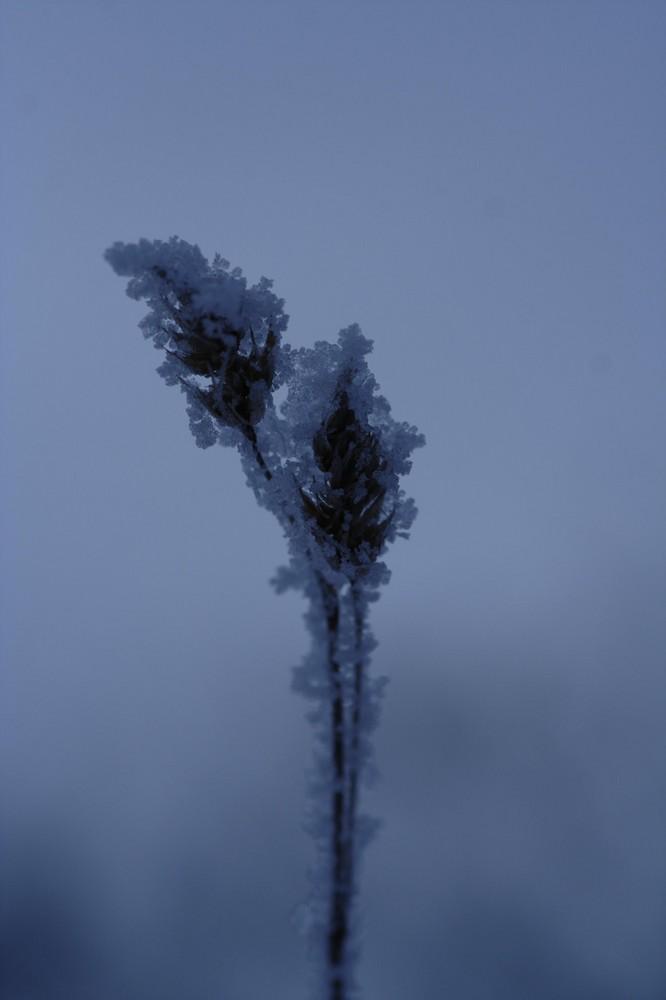 eisige -20°C
