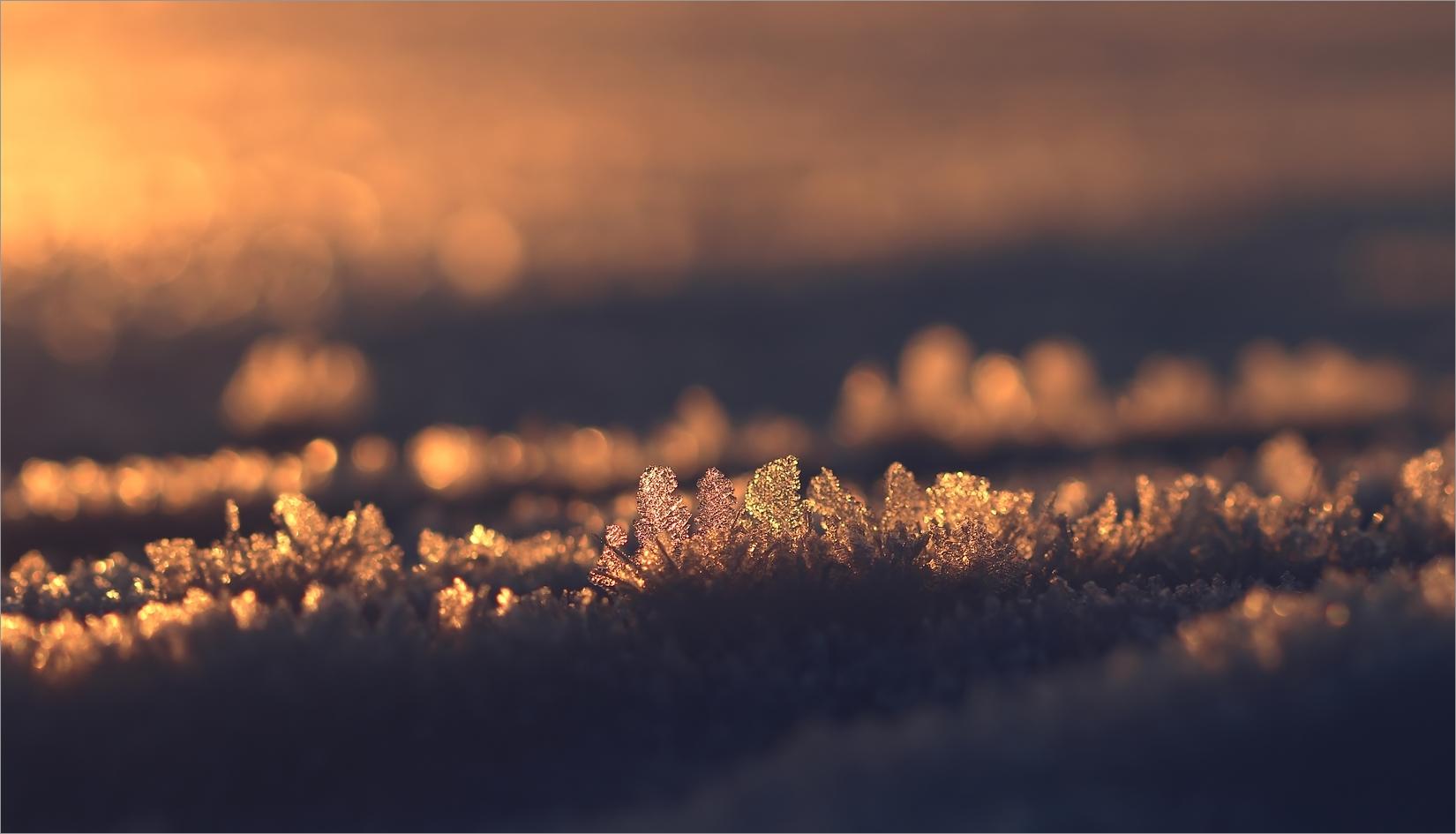 Eisige Welt