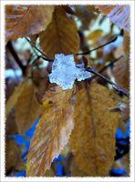 Eisiger Herbst