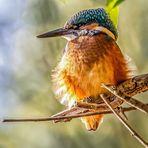 Eisiger Pluster Vogel