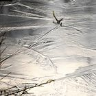 Eisiges Moor_4
