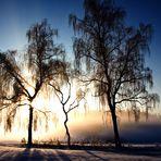 Eiskalte Erleuchtung