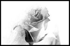 Eiskalte Liebe......?