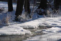Eiskalte Schönheit