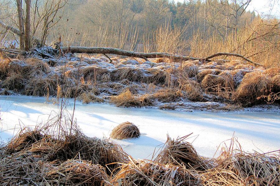 Eiskalter Wintertraum