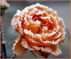 Eiskristalle (2)