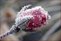 Eiskristalle (3)