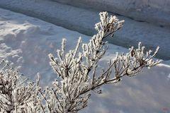 Eiskunst in der Natur