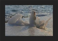 Eismännchen,                          in sich ruhend