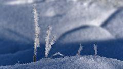 Eispflanzen.....