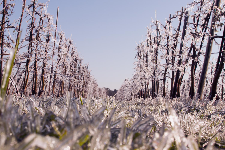 Eisplantage-2