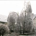 Eisregen 1988 Dez.