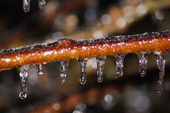Eisregen 2