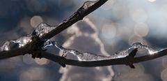 Eisschlange