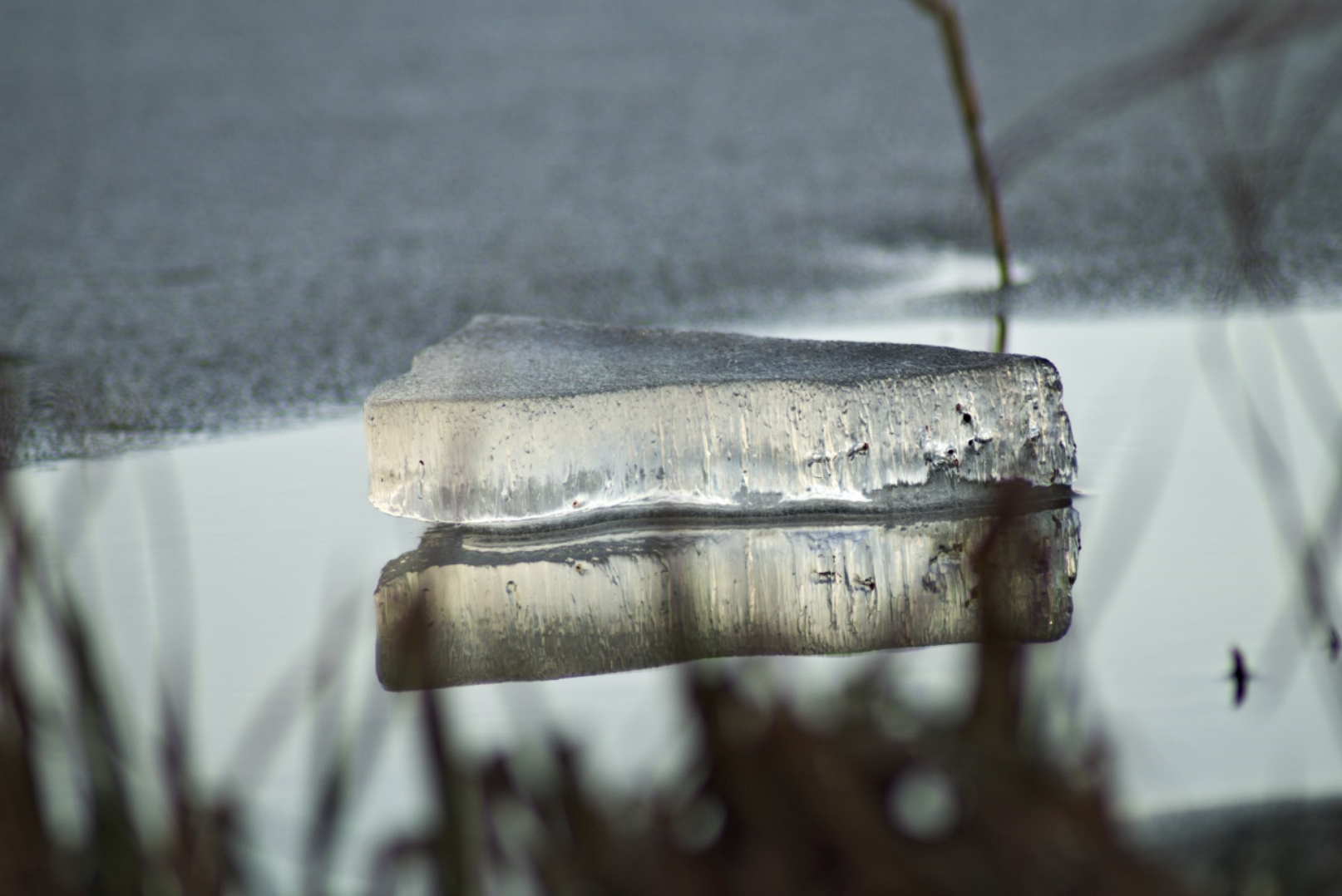 Eisscholle auf dem Bergwitzsee