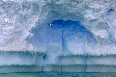Eisschwalbe